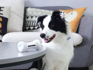 Умная интерактивная косточка-игрушка играет с вашей собакой